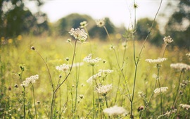 Preview wallpaper Summer, grass, flowers