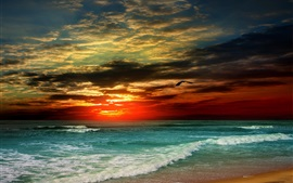 Preview wallpaper Sunset, beach, sea, waves, tropical, clouds, bird