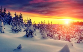 Preview wallpaper Sunset, winter, thick snow, trees