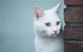 Preview wallpaper White cat, look, yellow eyes