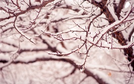 Preview wallpaper Winter, snow, tree, branches