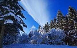 Preview wallpaper Winter, thick snow, spruce, trees