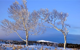 Winter, trees, white snow, hills, blue sky