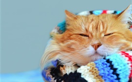 Preview wallpaper Cat gaze, warm, scarf, bokeh