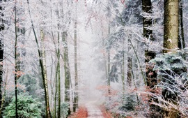 Forest trail, trees, white frost, fog, autumn