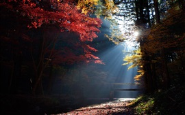 Forest, trees, bridge, sun rays, autumn