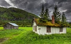 Hemsedal, Noruega, casa, musgo, árvores, grama, montanha, nuvens