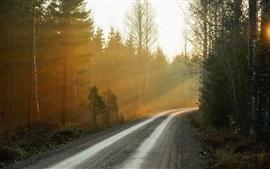Утро, лес, дорога, туман, восход солнца