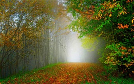 Morning, nature scenery, forest, trees, colorful leaves, road