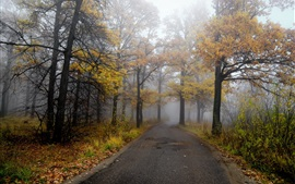 Preview wallpaper Morning, road, forest, autumn, fog