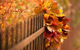 Nature, autumn, leaves, bokeh, fence