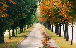 Nature landscapes, park, trees, road, autumn