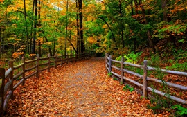 Park, nature, forest, trees, leaves, path, autumn