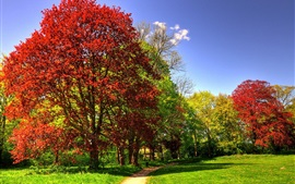 Park, trees, grass, sunny, autumn