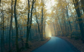 Preview wallpaper Road, forest, trees, fog, morning, autumn