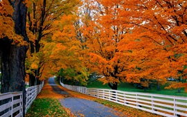 Road, trees, wood fence, autumn, grass, red leaves