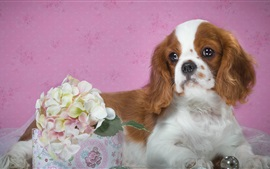 Preview wallpaper Spotted puppy, hydrangea flowers
