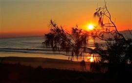 Закат, море, пляж, дерево, силуэт, красное небо