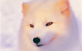 Preview wallpaper Arctic Fox in winter, face