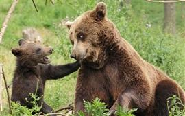 Медведи, семья, материнство и детеныш