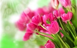 Ramo de flores de color rosa, tulipanes, la luz del sol