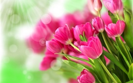 Bouquet flores cor de rosa, tulipas, luz solar