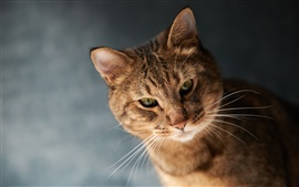 Preview wallpaper Brown color cat, whiskers, bokeh