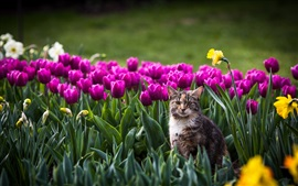 Preview wallpaper Cat in the flowers field, tulip, bokeh