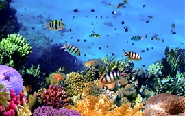 Preview wallpaper Colorful tropical fish, coral, underwater, ocean