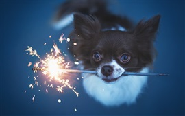 Preview wallpaper Cute dog play fireworks