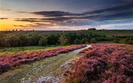 Preview wallpaper England, heather flowers, hills, trees, sunset, clouds, sky