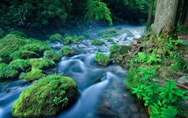 Forest, river, stream, stones, grass, fog