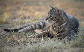 Preview wallpaper Gray cat lying ground, grass, bokeh