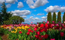 Many flowers, tulips, field, trees, sky, clouds