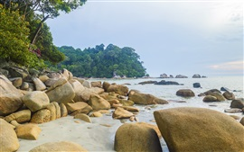 Sea, coast, beach, rocks, trees