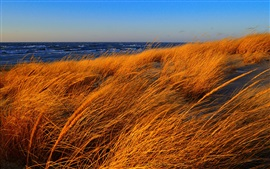 Preview wallpaper Beach, sea, grass, autumn, wind