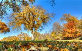 Preview wallpaper Beautiful autumn, trees, grass, yellow leaves
