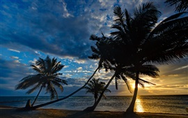 Preview wallpaper Coast, palm trees, sunset, tropics