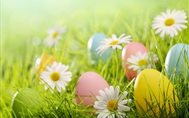 Preview wallpaper Easter eggs, white daisies flowers, grass