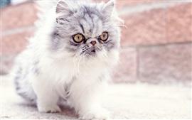 Preview wallpaper Furry kitten, baby, look, eyes, cute