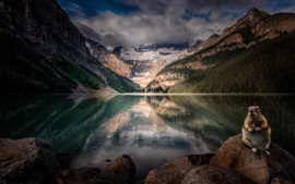 Lake Louise, Alberta, Canada, rodent, mountains, trees, clouds, dusk