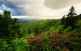 Preview wallpaper Mountains, trees, flowers, morning, clouds, nature landscape