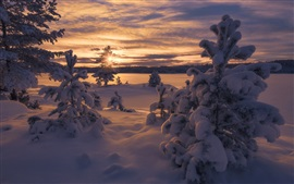 Norway, winter, thick snow, trees, sunset