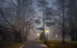 Park, foggy, path, lamp posts, benches, trees, night