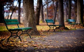 Park, walkway, bench, trees, autumn