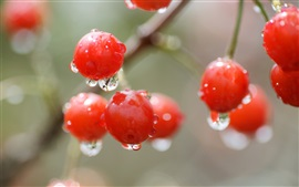 Preview wallpaper Red cherry, berry, water drops, rain, bokeh