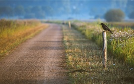 Road, crow, grass, blur