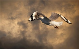 Seagull flight, clouds, dusk