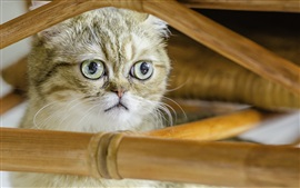 Aperçu fond d'écran Shorthair chat, chaton mignon, visage, clôture