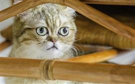 Shorthair cat, cute kitten, face, fence